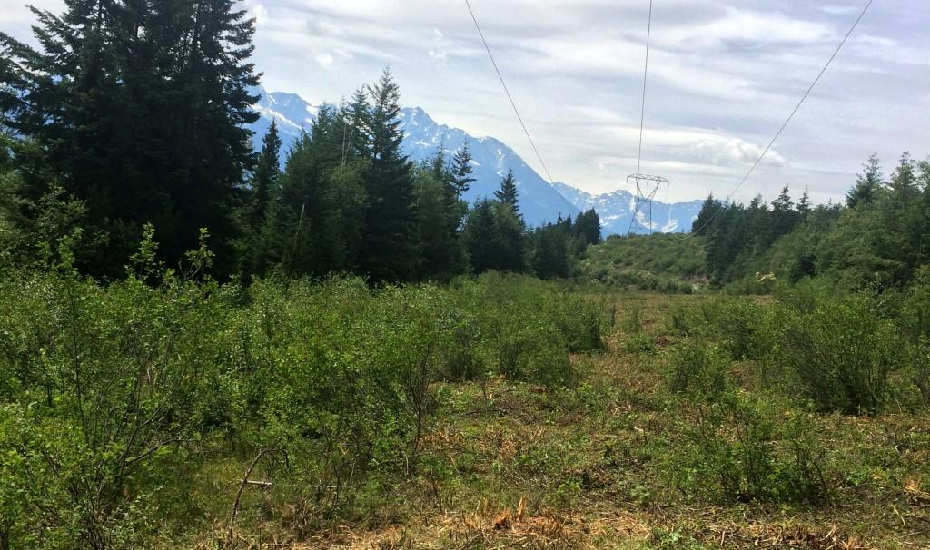 Land Grading & Drainage